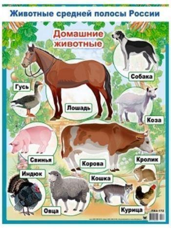"""Купить Плакат """"Домашние животные"""" в Москве по недорогой цене"""