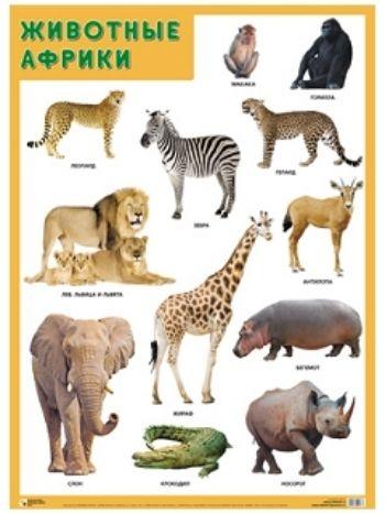 """Купить Плакат """"Животные Африки"""" в Москве по недорогой цене"""