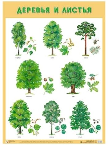 """Купить Плакат """"Деревья и листья"""" в Москве по недорогой цене"""