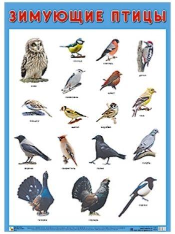 """Купить Плакат """"Зимующие птицы"""" в Москве по недорогой цене"""
