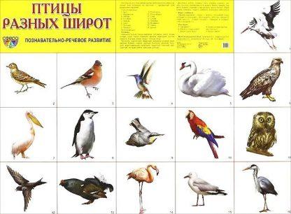 """Купить Плакат """"Птицы разных широт"""" в Москве по недорогой цене"""